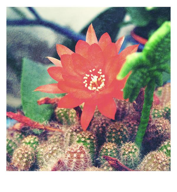 Cactus  - Tropical Dreams by Alabastra