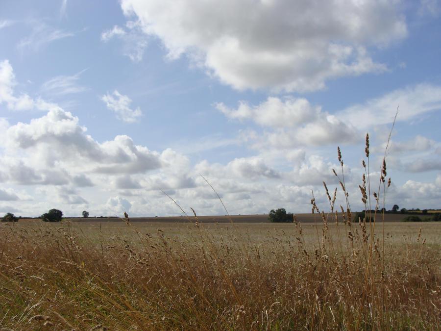 The Fields by yogeshtank