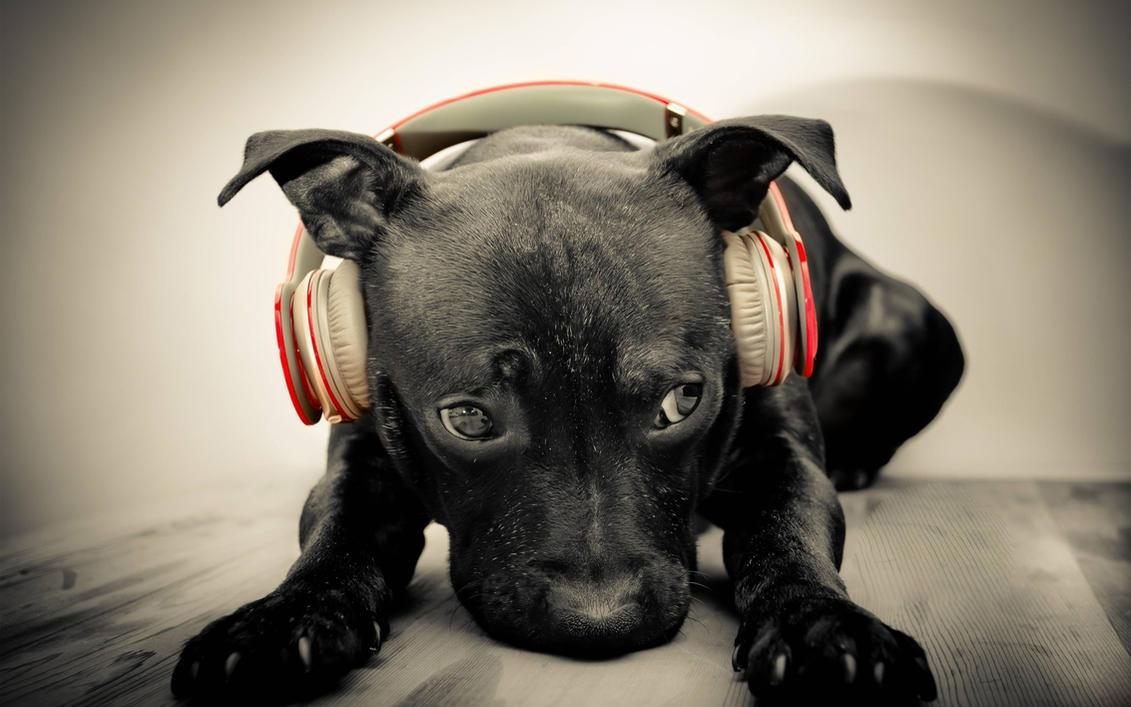 Dog Sounds - Listen or Free Download MP3 - Orange Free Sounds