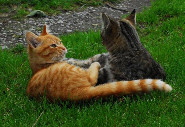 Wat zouden jouw kattennamen in het nederlands zijn? - Pagina 3 Smile_by_OneToughDuck