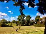 Horses on Rhine Meadows