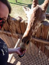 My first giraffe