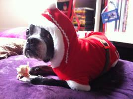 Christmas Sancho