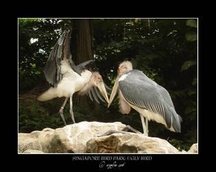 Singapore.5: Ugly Bird by Angelfae
