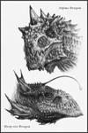 Dragons I