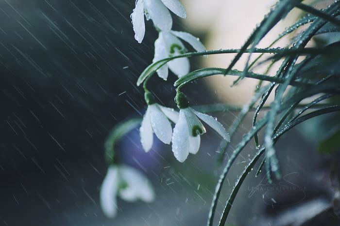 spring rain by violetkitty92