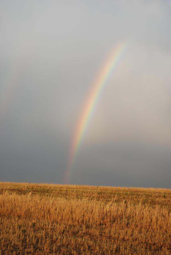 Rainbow by tl3319