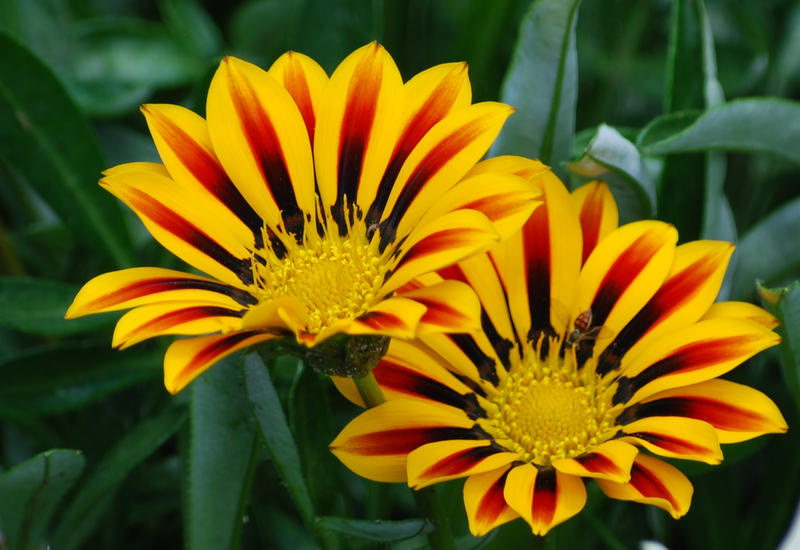 Yellow and brown flower by tl3319 on deviantart yellow and brown flower by tl3319 mightylinksfo