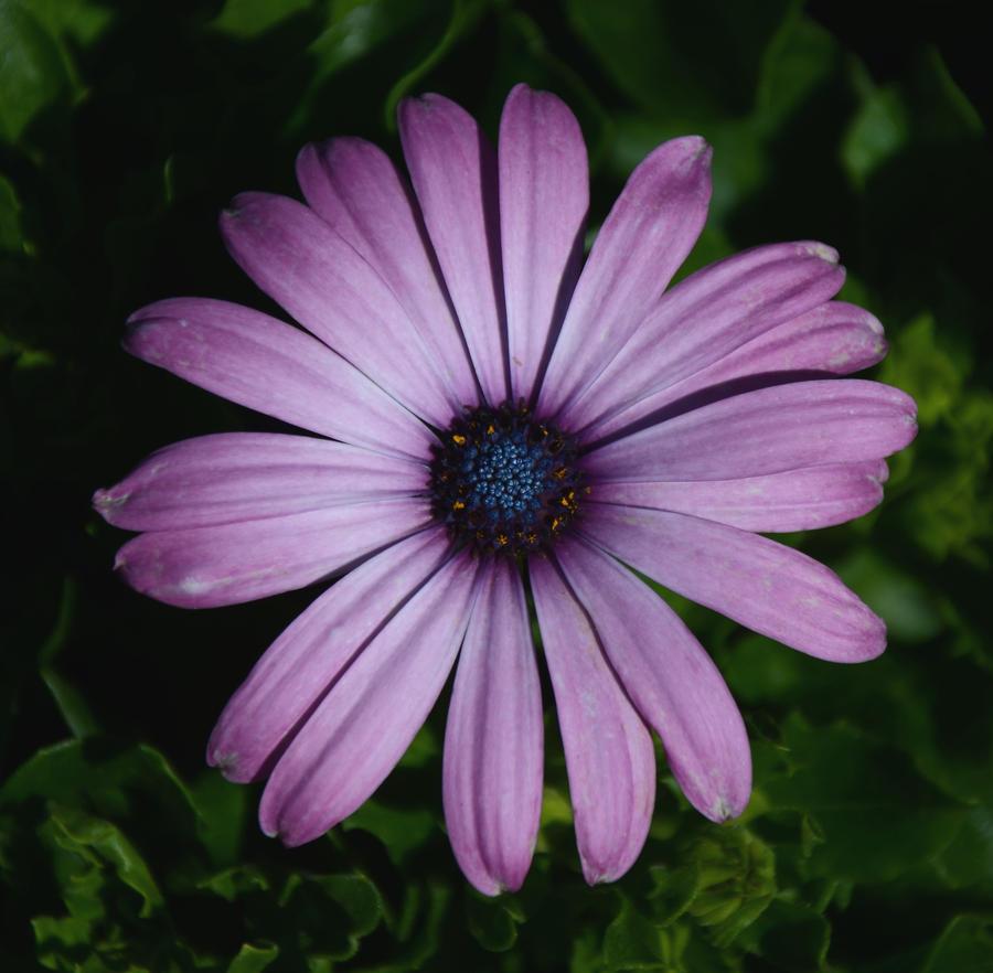Light Purple Flower By Tl3319 On Deviantart