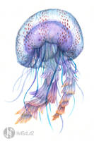 Jellyfish by Hagalaz-Paintings