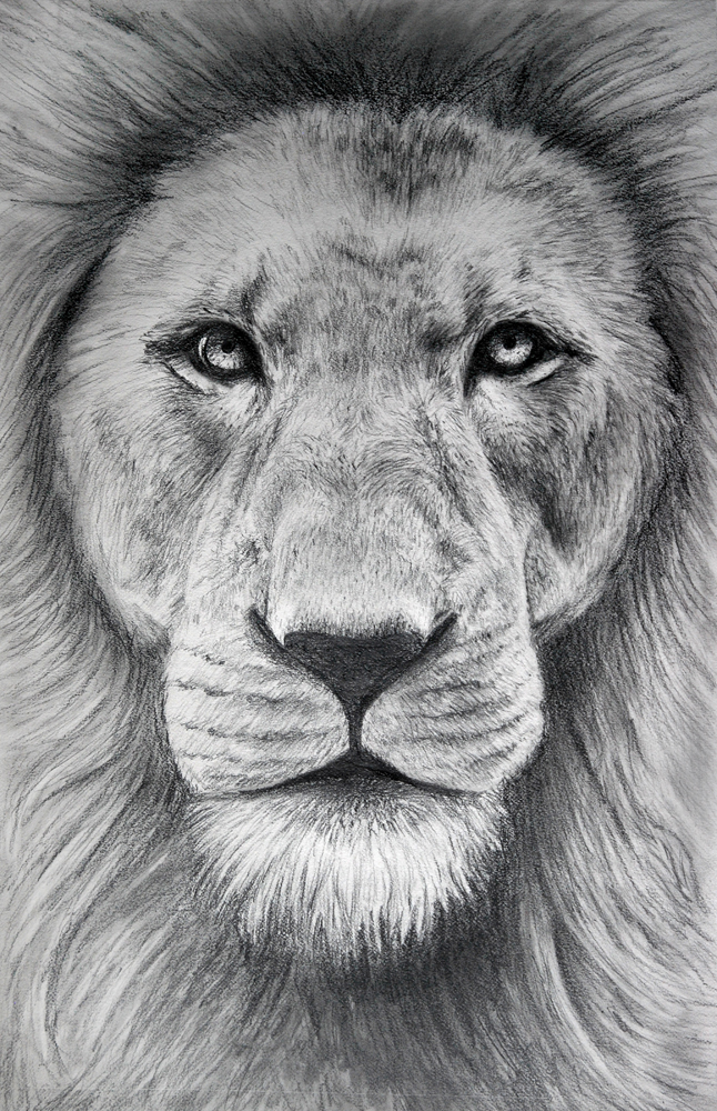 Pencil Lion by Laughing-Sky on DeviantArt