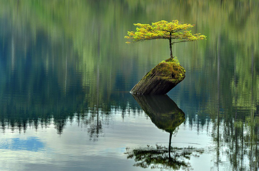 Lonely Little Tree by oushua
