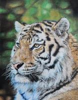 Siberian Tiger Pencil Drawing by TittiTuulia