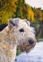 Wheaten Terrier Commission by TittiTuulia