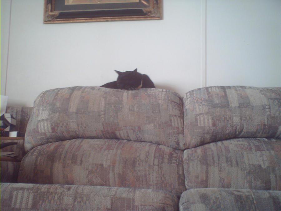 Legolas The Cat by Deamonsin-7