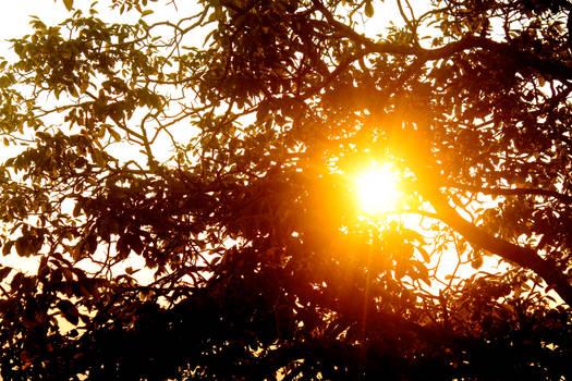 The Tuscan Sun