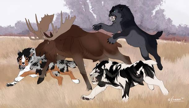 PH   Moose Hunt