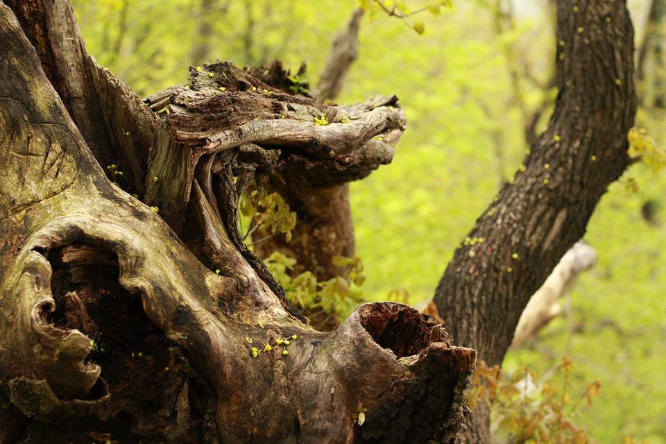 Woodlife by sandy100000951