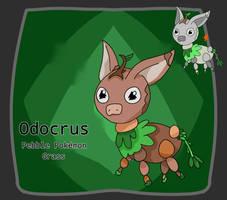 Odocrus