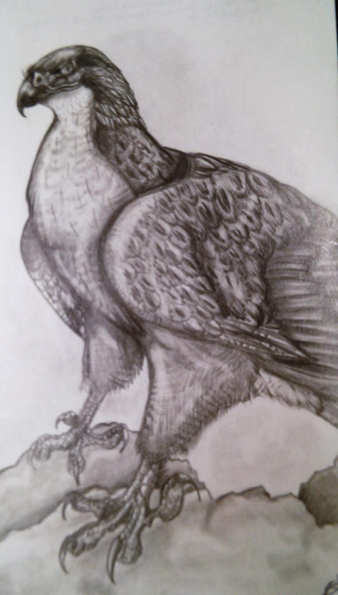 the gallery for gt hawk drawings in pencil