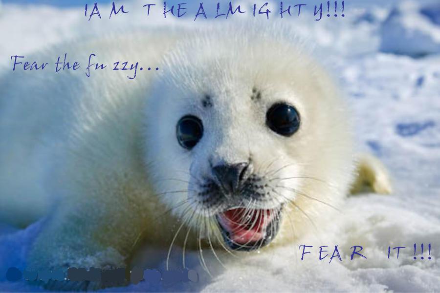Fear The Fuzzy Wwwbilderbestecom