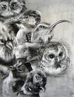 Birds by EmilyWalus