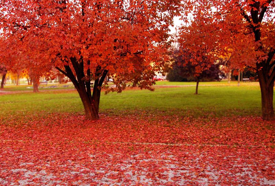 pretty fall by 3ammy on deviantart
