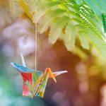 Colorful Crane