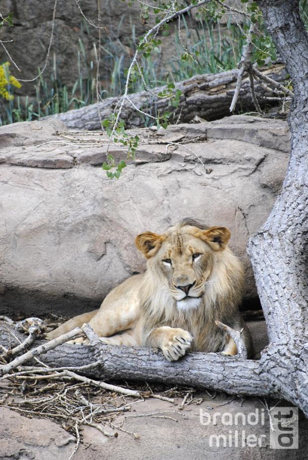 Lion by Strange-1