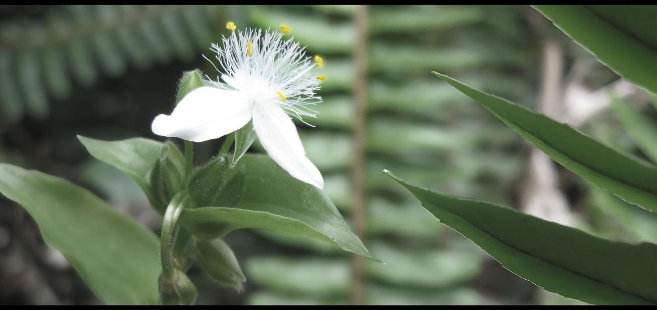 Single Flower by Ratchet-lombris