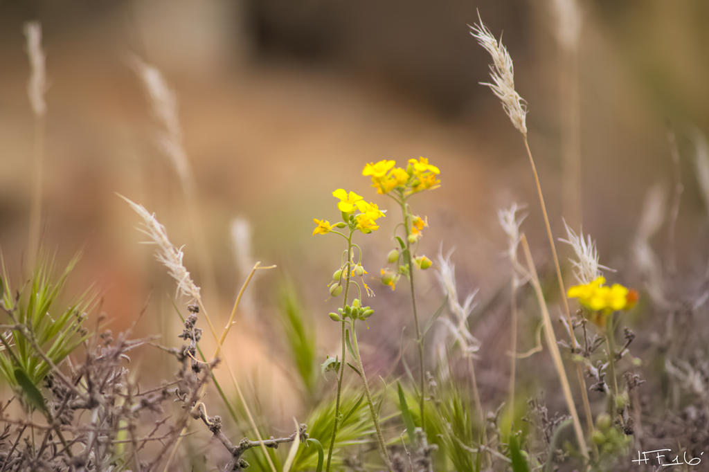 Desert Wild Flowers by Heather-Ferris