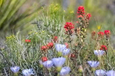 Blue and Red Flowers by Heather-Ferris