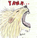 Lion - yawn