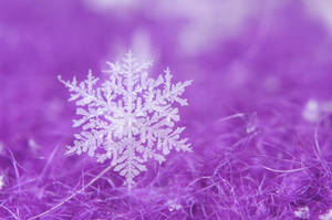 A Wooly Snowflake by crimsonpenguin