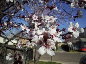Blossom by lilias