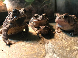 Toad Family Photo by CrookedEmerald