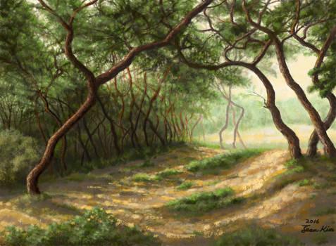 A Pine Grove