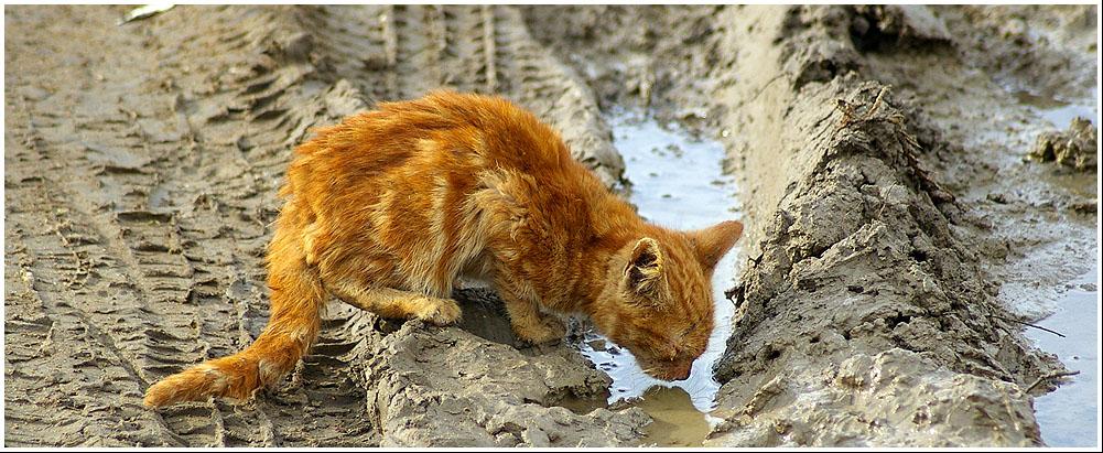http://fc17.deviantart.com/fs23/f/2008/015/3/c/blind_cat_drinking_water_by_mloentje.jpg