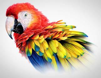 Scarlet Macaw by marchenart7