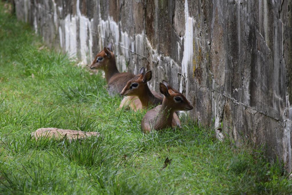 Memphis Zoo - Random 1 by draegen