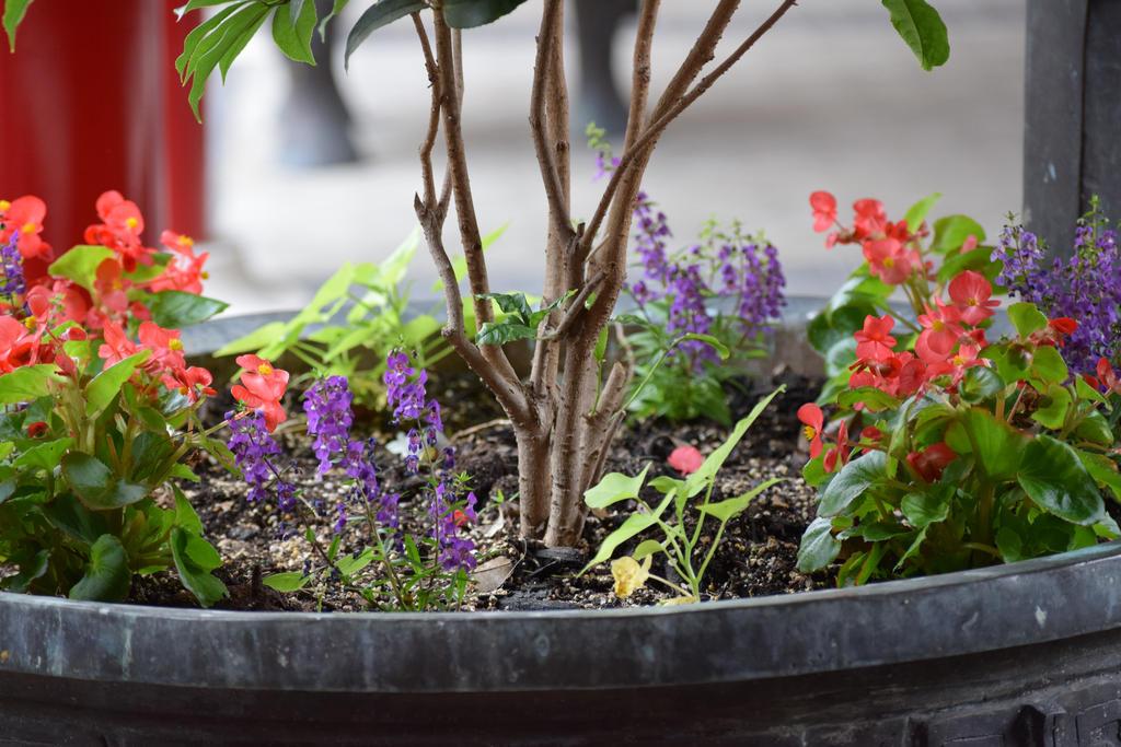 Plants 1 by draegen