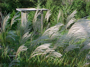 Grass and Wind