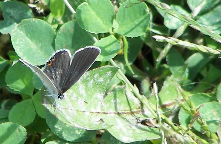 Butterfly I by Littlelion225