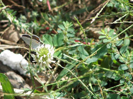 Butterfly II by Littlelion225