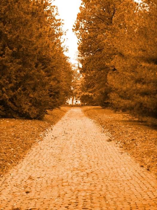 Arbor Lodge Drive by Littlelion225
