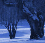 A cold willow