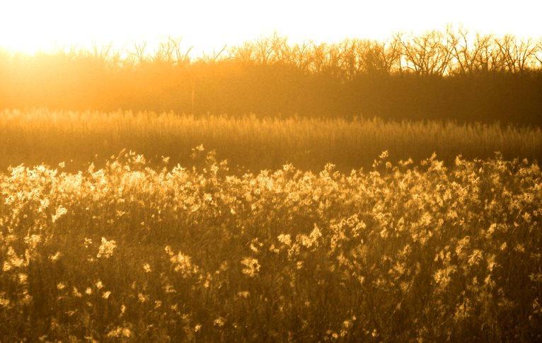 The sun fills my soul by Littlelion225
