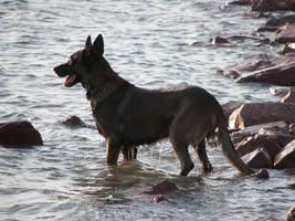 Wet Dog by Littlelion225