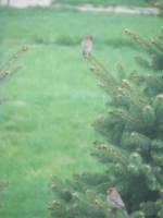 Strange red birds by Littlelion225