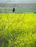 Field or yellow by Littlelion225